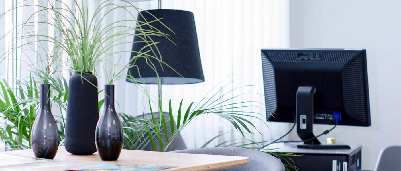 Bild von einem, mit Zimmerpflanzen eingerichtetem, Büro